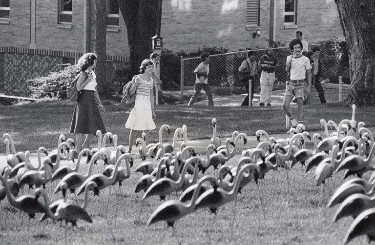 Flamingos on Bascom old photo