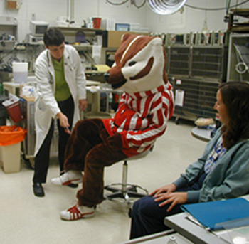 Bucky Badger at the vet lab.